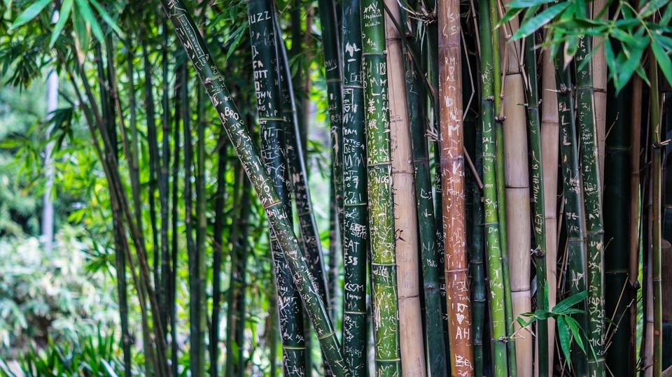 Overige / bamboe